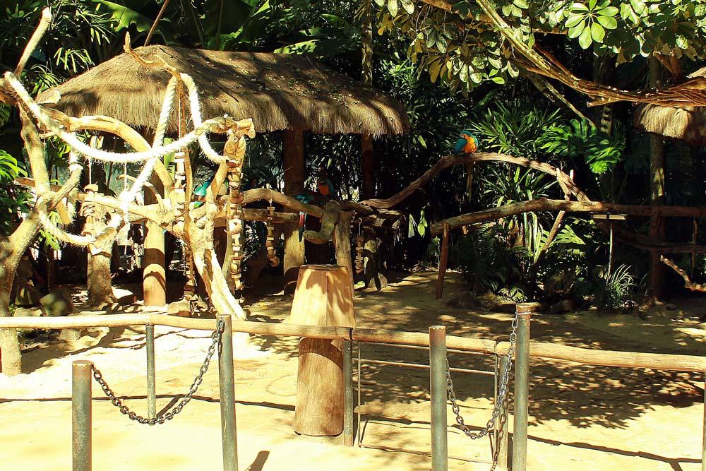 foz_do_iguacu_parque_das_aves_araras_mansas