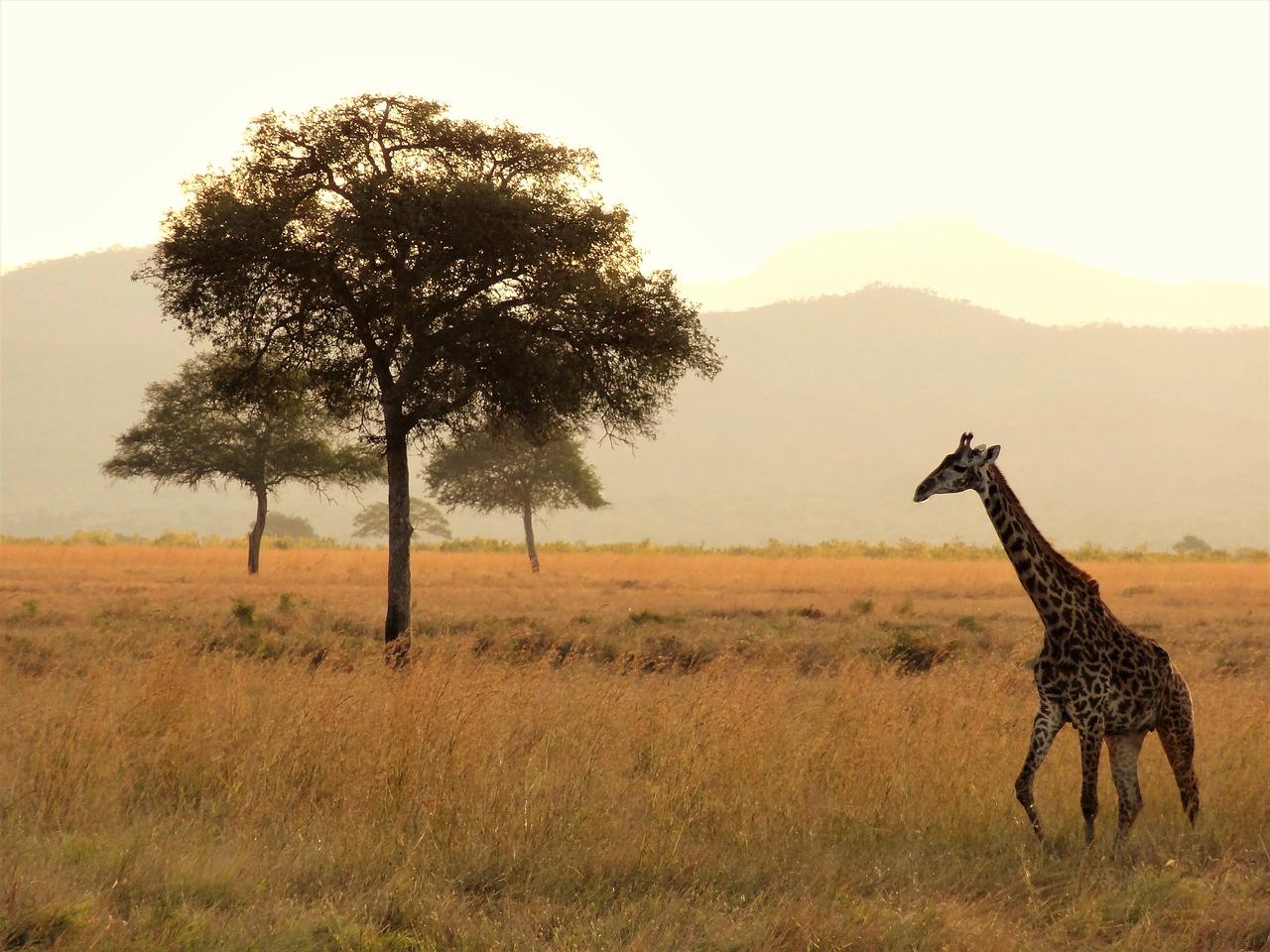 Como organizar sua viagem pela África: África do Sul, Quênia e Tanzânia