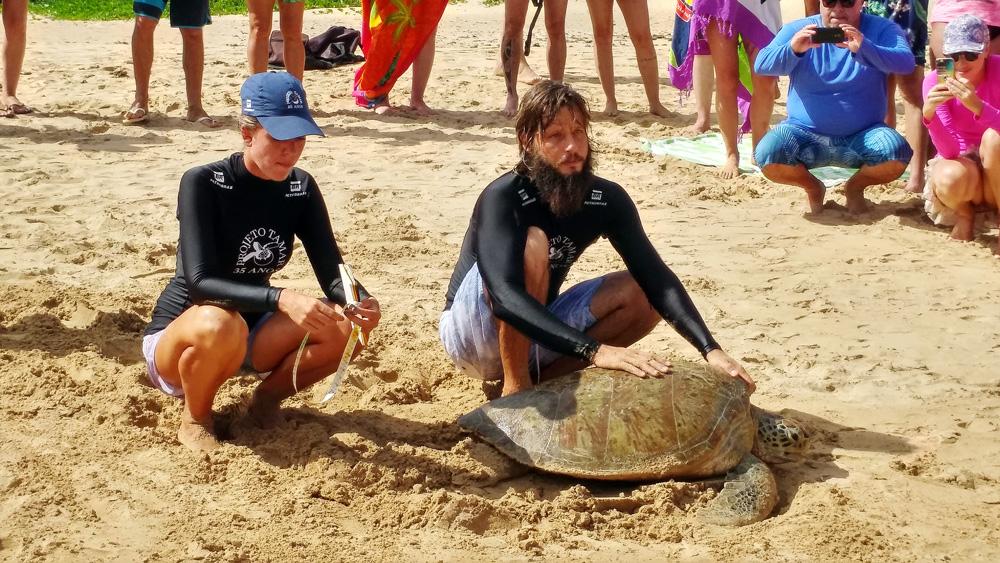 Dois biólogos examinando uma tartaruga na areia da praia do Sueste em Fernando de Noronha.
