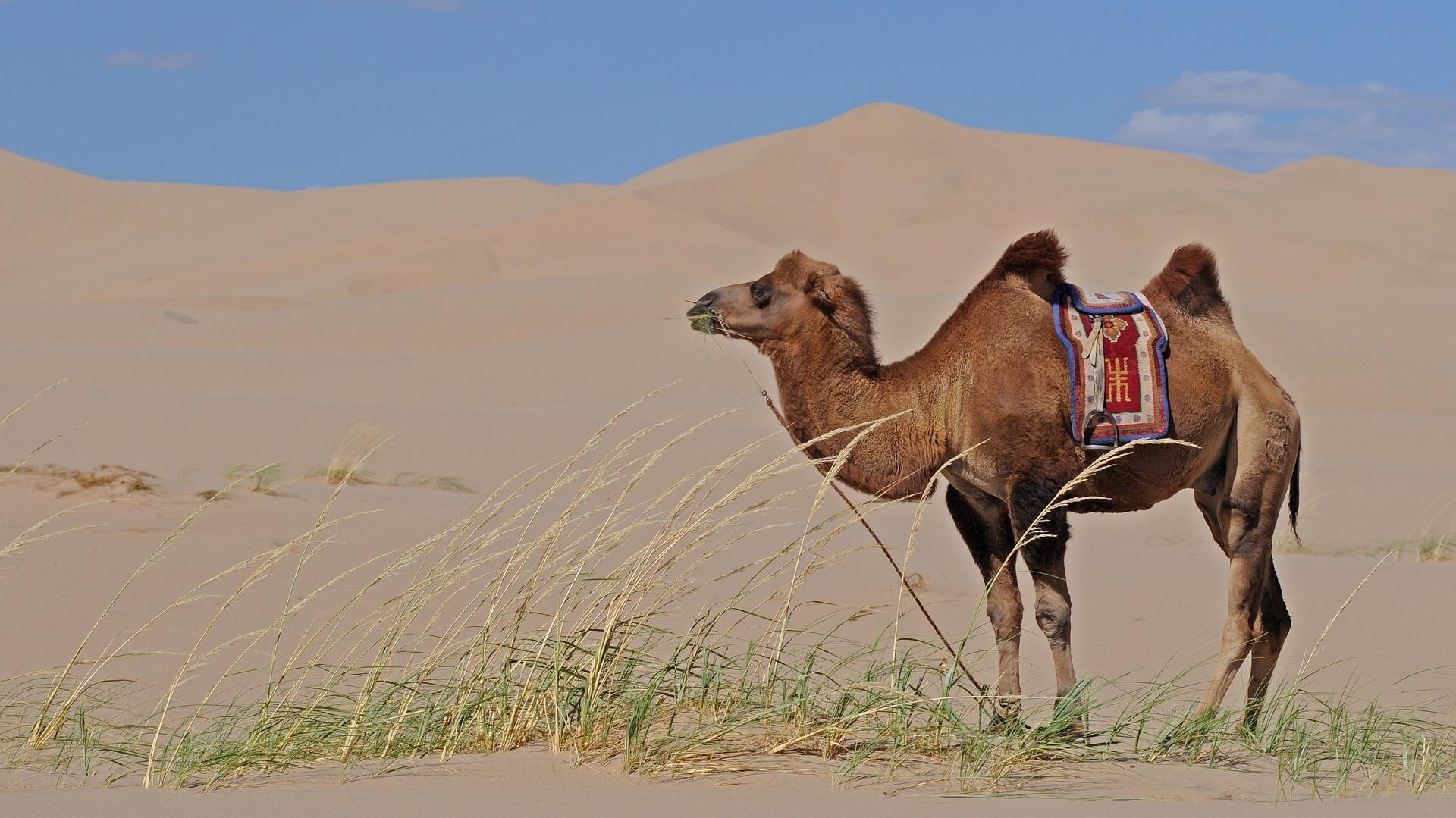 12 coisas que você precisa saber antes de viajar para o Marrocos!