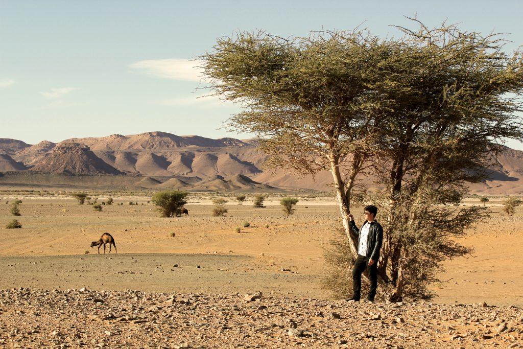 Dromedários no deserto de Ouzina
